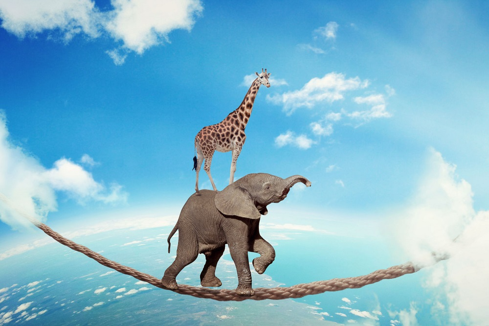 34629243 - managing risk business challenges uncertainty concept. elephant with giraffe walking on dangerous rope high in sky symbol balance overcoming fear for goal success. young entrepreneur corporate world